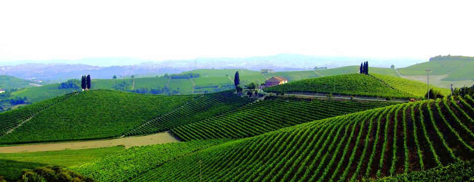 Scopri il nostro catalogo vini
